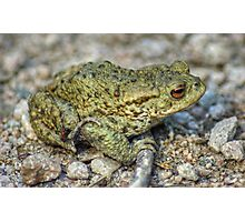 The Toad And The Hitchhiker Photographic Print
