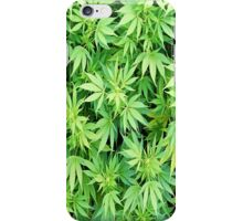 Marijuana iphone case 4/4s iPhone Case/Skin