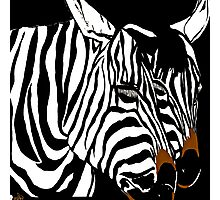 Zebra Black and White Photographic Print