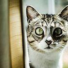 Cat Eyes by Andrew Simoni