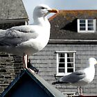 Two Seagulls, Padstow, Cornwall by KUJO-Photo