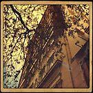 Downtown by Vana Shipton