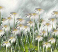 Daisy Field by leapdaybride