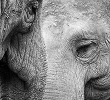 A pair of Pachyderms by woodnimages