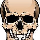 Human skull frontal view by Colin Cramm
