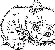 kitten by BoYusya