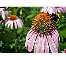 Bee Bum Photographic Print