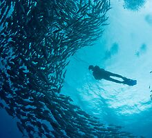 diver in a school of jacks by paulcowell