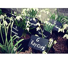 Snowdrops at Anglesey Abbey Photographic Print