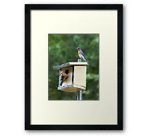 Bluebird Parents Framed Print