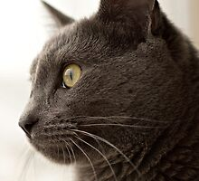 Russian Blue by tahigens
