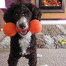 Come and play...pleaseeeeeeee by Eileen O'Rourke