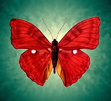 red Butterfly acrylic painting by goldyparazi