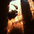 Dramatic Dachshund by melanie1313