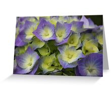Blue Hydrangea Macrophylla Greeting Card
