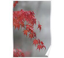 Autumn maple Poster