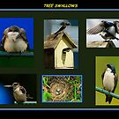 TREE SWALLOW COLLAGE by RoseMarie747