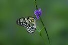 White Butterfly on Flower by Sandy Keeton