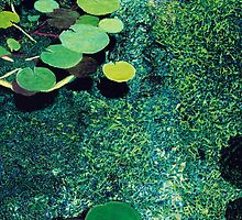 Green Shimmering Pond by Allan P Friedlander