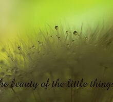 The Beauty of the Little Things... by Liane Pinel