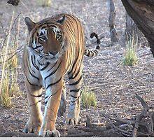 Tiger, Tiger Burning Bright by Braedene