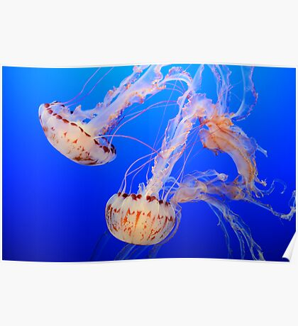The Beauty Of Jelly Poster