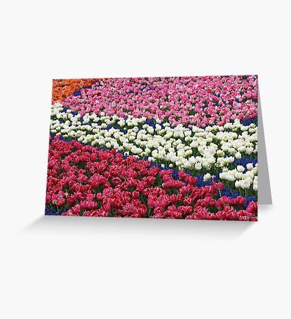 Tulips Galore! Keukenhof Gardens Greeting Card