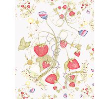 The Jubilee Butterflies and Strawberries Photographic Print