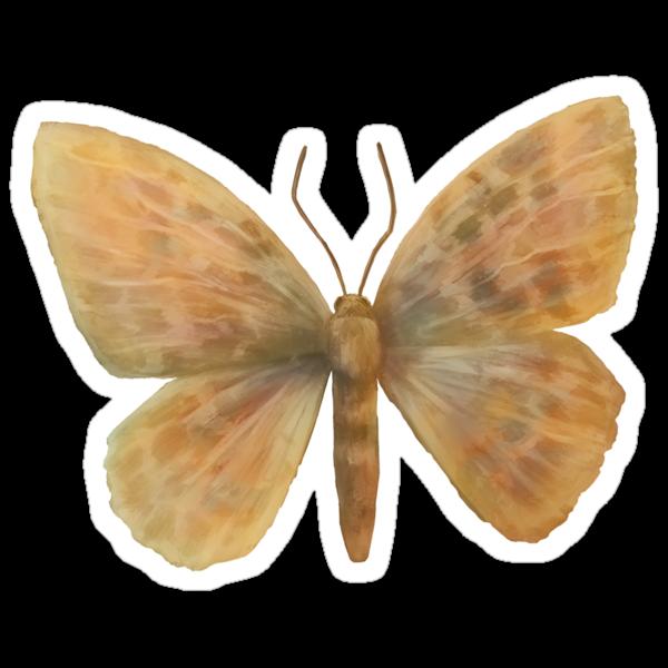 Epirrita autumnata by fictionalfriend