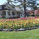 House of Tulips by Jann Ashworth