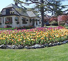 House of Tulips by Jann Ashworth