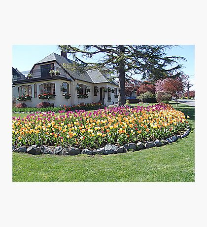 House of Tulips Photographic Print