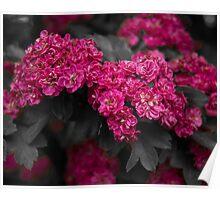 Hawthorne Flowers Poster