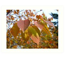 Mayday tree in the Fall Art Print