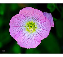 Purple Wildflower Photographic Print
