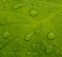 Green Leaf with Rain Sticker