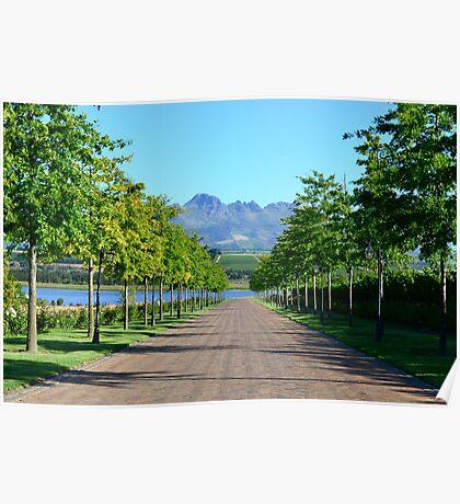 Stellenbosch Wine Country Poster