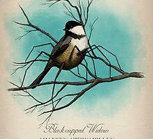 Black-capped Widow by Howard Dale