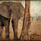 ALL IN AUTUM - WHEN IS SPRING? - THE AFRICAN ELEPHANT -Loxodonta Africana by Magriet Meintjes