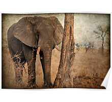 ALL IN AUTUM - WHEN IS SPRING? - THE AFRICAN ELEPHANT -Loxodonta Africana Poster