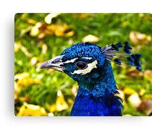 Peacock Head Canvas Print