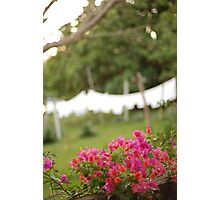 the hotel towels Photographic Print