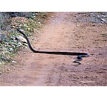 THE BLACK MAMBA, ONE OF THE DEADLIEST SNAKES IN THE WORLD! - Dendroaspis polylepis Photographic Print