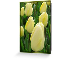Beautiful Dreamers - Keukenhof Tulips Greeting Card