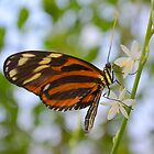 Butterfly on Twig with White Flowers by msqrd2