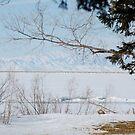 Willard Lake by Nicole  Markmann Nelson
