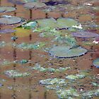 Lilly Pads by Lisa McIntyre