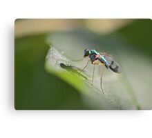 Delicate Long-legged Fly Canvas Print