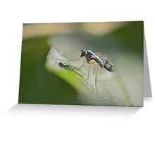 Delicate Long-legged Fly Greeting Card