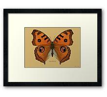 Argus Butterfly Framed Print
